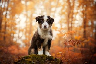 Photographe chien en forêt couleurs d'automne